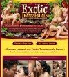 Exotic Transsexuals Members Area